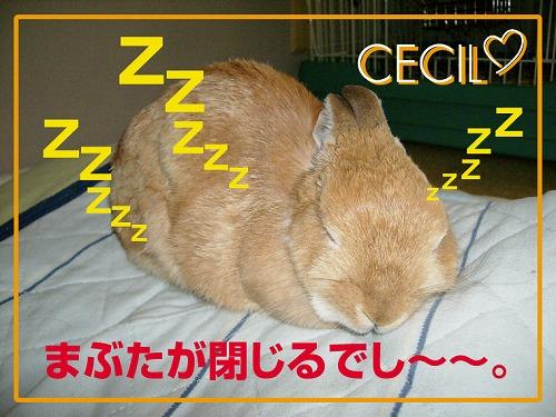 枕大好き3