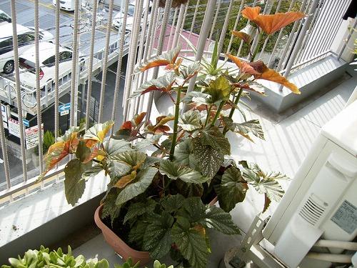 s-植物たち3