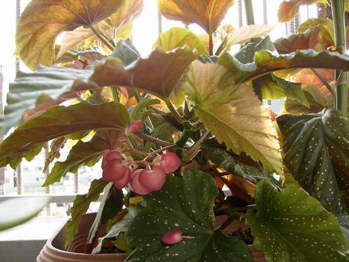 s-植物たち4