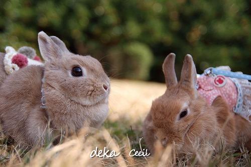 s-Cecil_&_deka