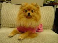 めずらしくピンクのお洋服☆