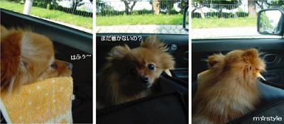 公園へ向かう車の中