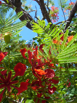 南国にはやはり赤い花!