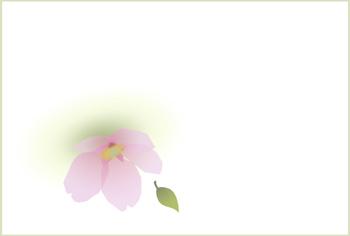 061028sakurahagaki