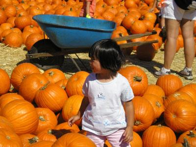 E_PumpkinPatch1
