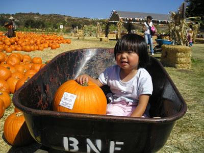 E_PumpkinPatch2