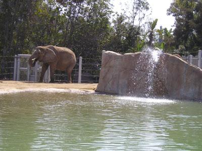 Zoo_ElephantOdyssey13