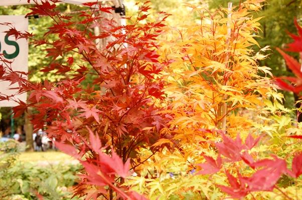 秋のPSU2