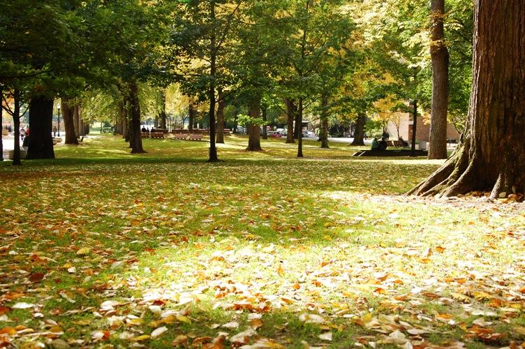 秋のPSU7
