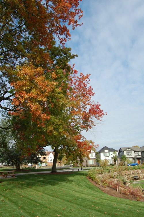 住宅と紅葉  5