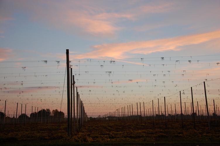 農場の夕日1