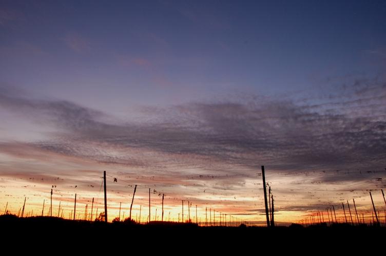 農場の夕日3