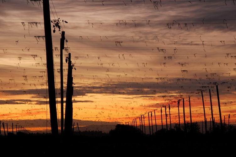 農場の夕日4