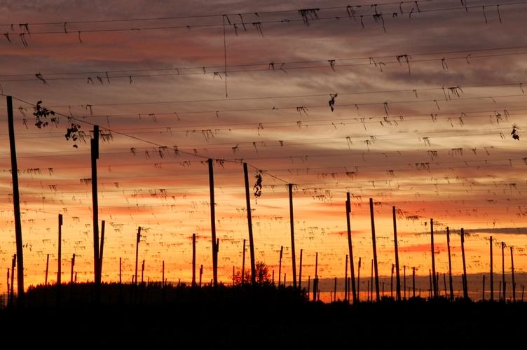 農場の夕日5