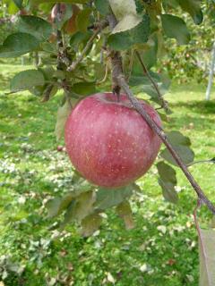 安曇野りんご