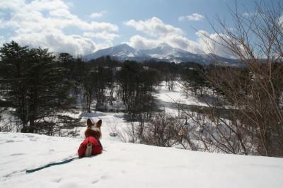 裏磐梯雪遊び
