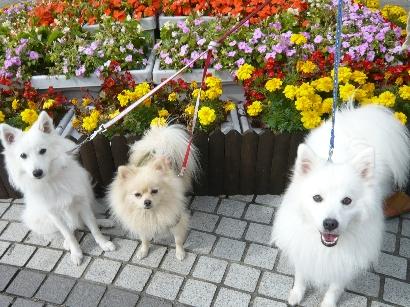 花に囲まれた男の子たち♪