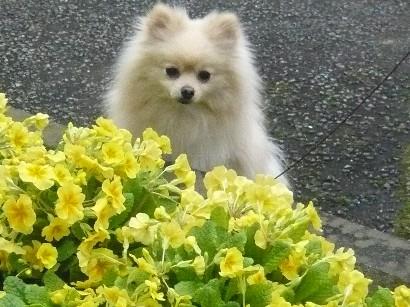 黄色い花とぼちゅ♪