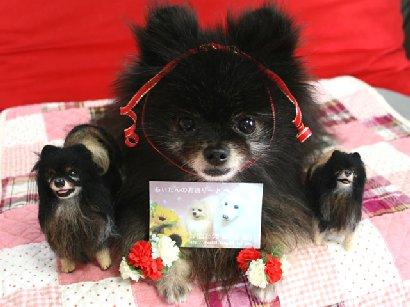 Tonちゃん3姉妹