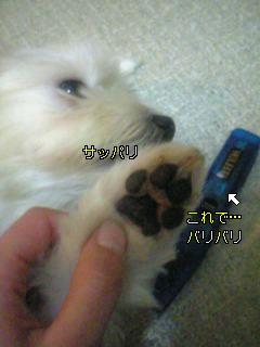 20071113053444.jpg