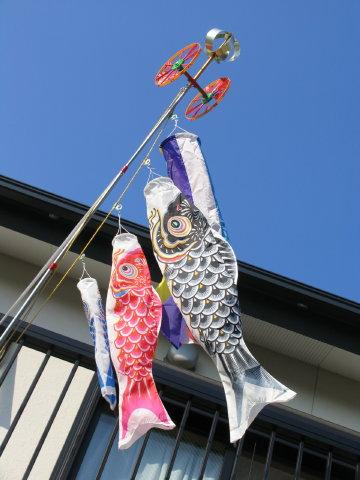 3年目の鯉のぼり