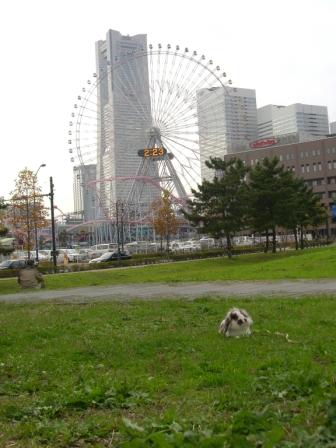 2007/11/19/no23