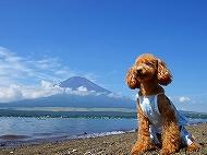 チェリーと富士山