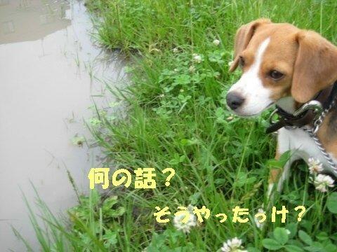 IMG_0369_sh01.jpg