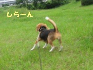 IMG_0375_sh01.jpg