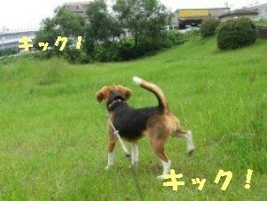 IMG_0376_sh01.jpg
