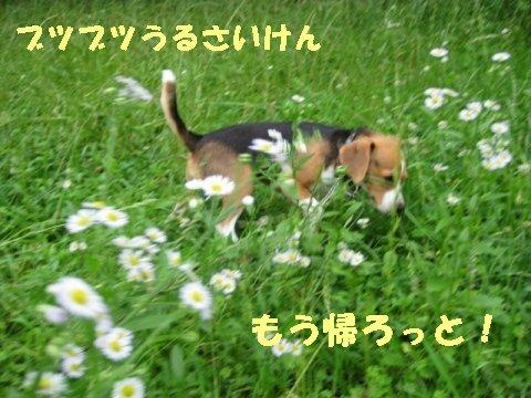 IMG_0382_sh01.jpg