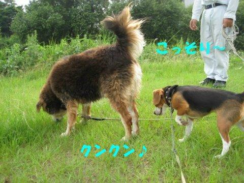 IMG_0682_sh01.jpg