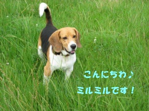 IMG_0706_sh01.jpg