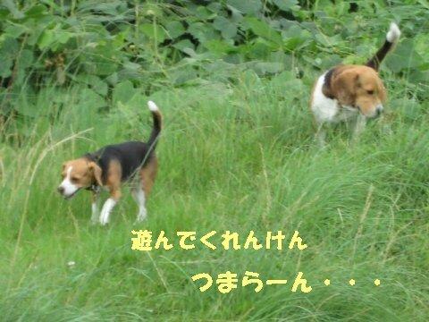 IMG_0707_sh01.jpg