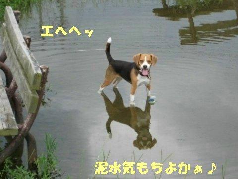 IMG_0709_sh03.jpg