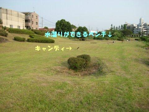 IMG_0810_sh01.jpg