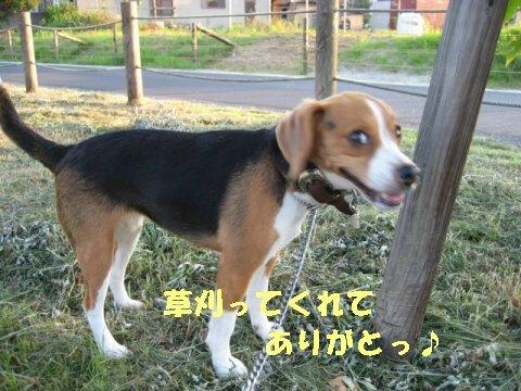 IMG_0836_sh01.jpg