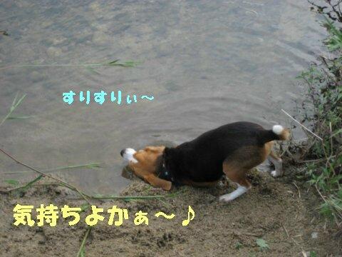 IMG_0924_sh01.jpg