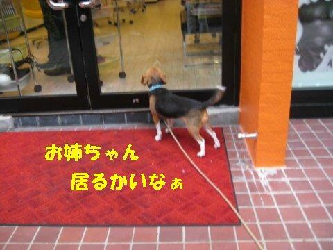 IMG_0942_sh01.jpg