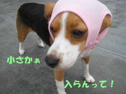 IMG_1252_sh01.jpg