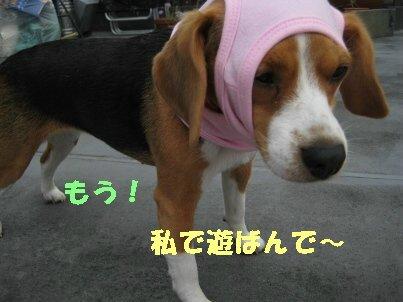 IMG_1254_sh01.jpg