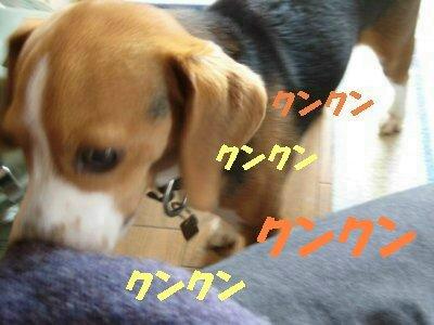 IMG_1395_sh01.jpg