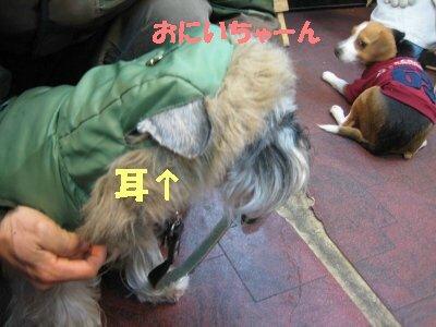 IMG_1451_sh01.jpg