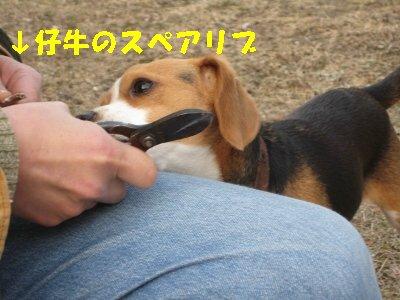IMG_1919_sh01.jpg