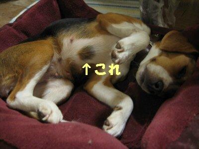 IMG_1940_sh01.jpg