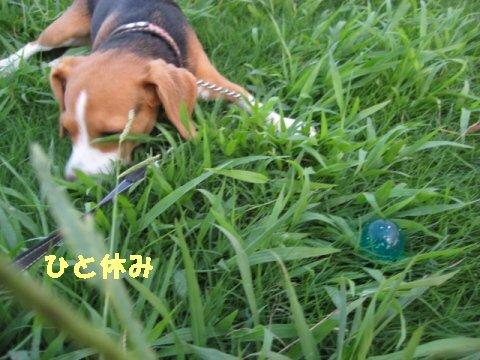 IMG_2005_sh01.jpg