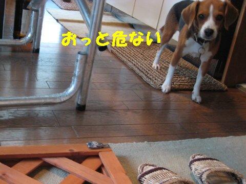 IMG_2252_sh01.jpg