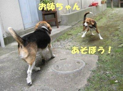 IMG_2571_sh01.jpg