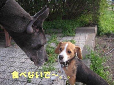 IMG_2586_sh02.jpg