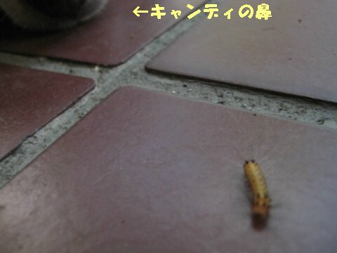 IMG_3179.jpg